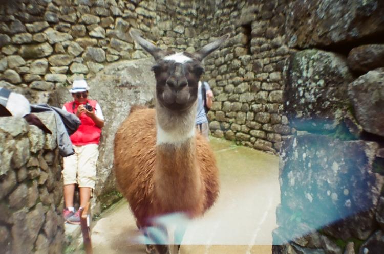 llama-8-of-31